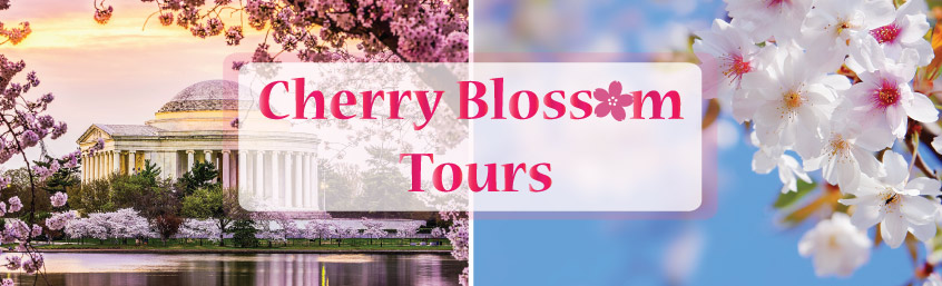 Washington DC Cherry Blossom Tours
