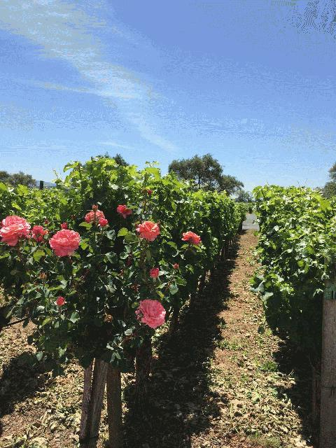 Napa Valley Tours From Fremont