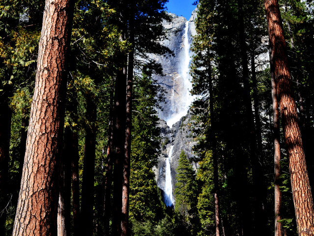 1 Day Yosemite And Giant Sequoias Tour From San Francisco