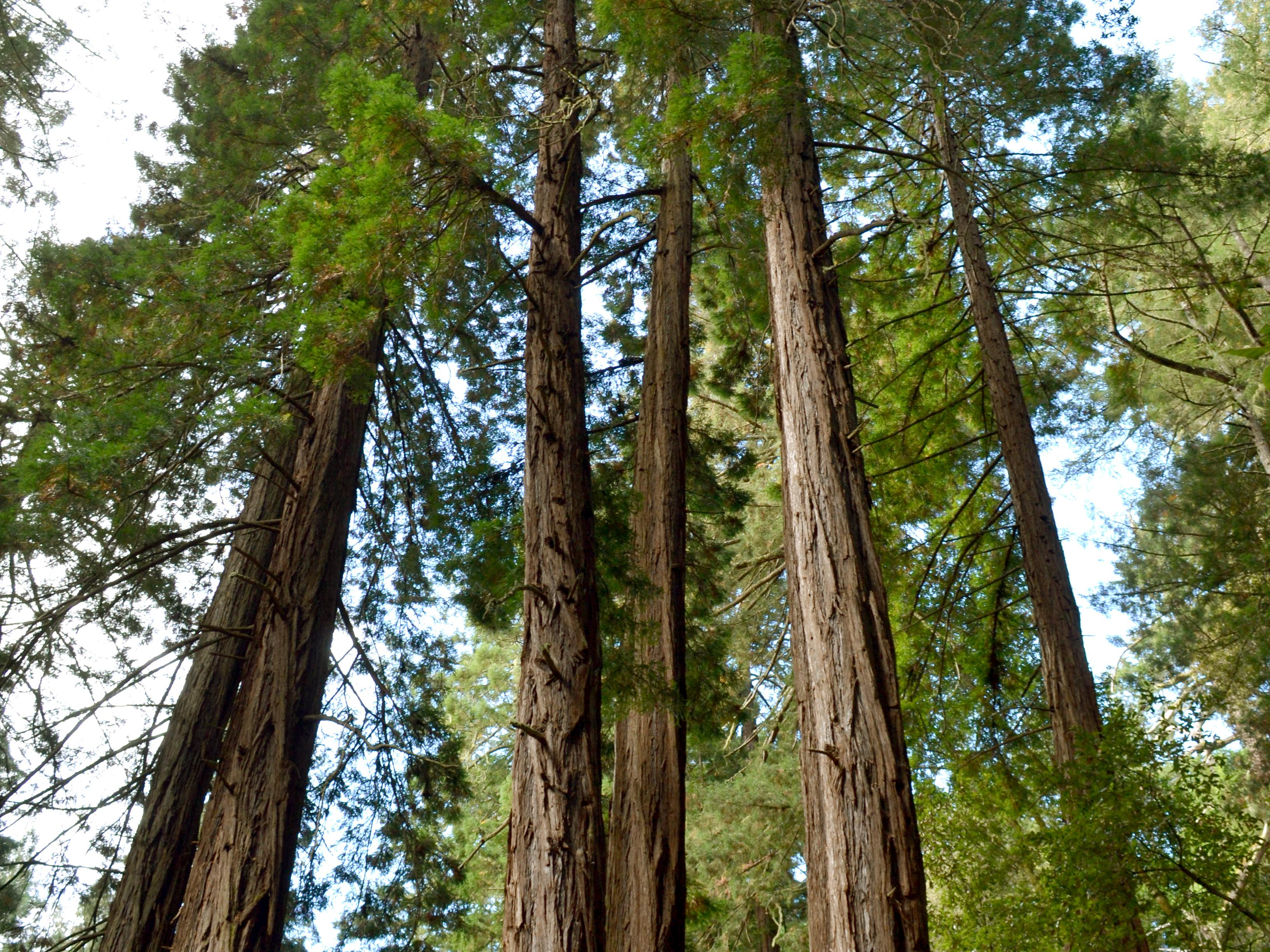 1-Day Napa Valley, Sonoma Wine Country, and Muir Woods Tour from San ...