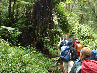 8-Day Kilimanjaro Climbing Tour (Machame Route) from Moshi