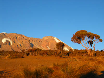 8-Day Kilimanjaro Adventure (6-Day Climbing) - Shira Route
