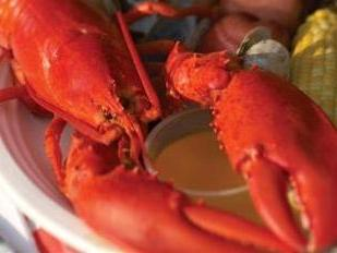 1-Day Downeast Maine and Lobsterbake from Boston