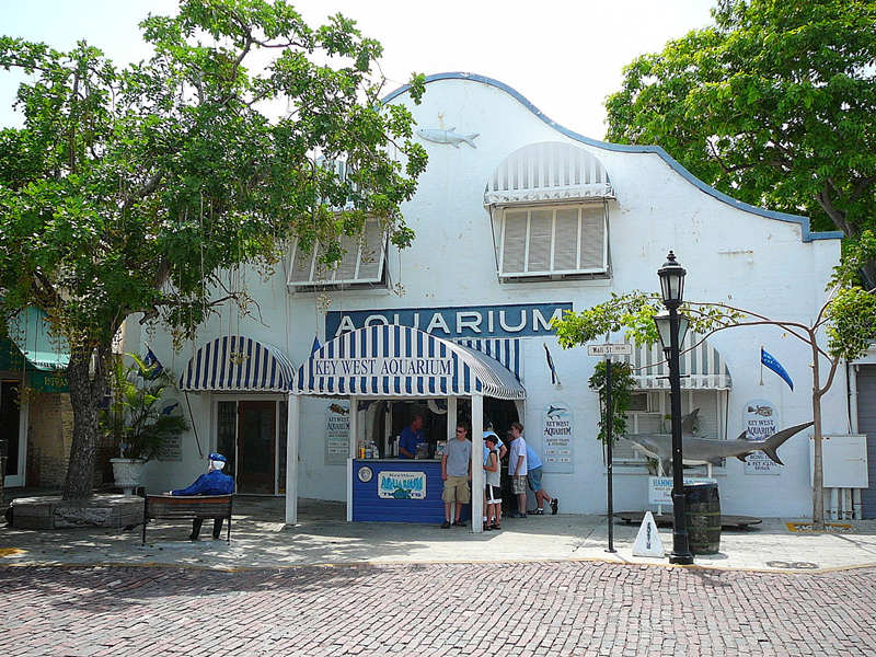 1-Day Tour to Key West Aquarium