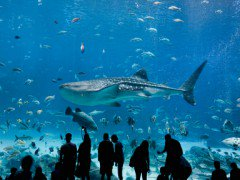 Shark Reef Aquarium Ticket