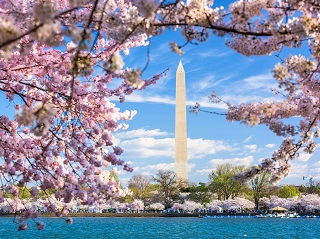 2-Day Philadelphia, Washington DC Cherry Blossom Festival Tour from New York