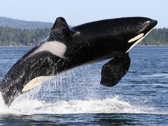 2-Day Vancouver Island and Tofino Whale Watching Tour from Vancouver