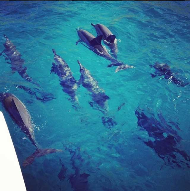 Dolphins, Snorkel and Sail