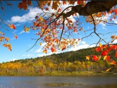 5-Day Boston, Plymouth, Acadia, New England Fall Foliage tour (Boston Airport pick up/transfer)