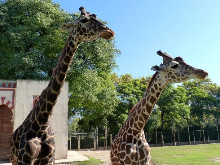 Temaiken Zoo Tour from Buenos Aires