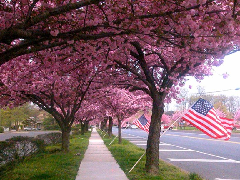2-Day Newport, Rhodes Island, New Jersey Cherry Blossom Tour from Boston