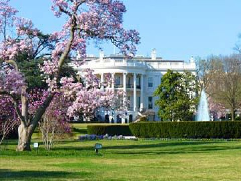 3-Day Washington DC Cherry Blossom Festival Tour from Toronto