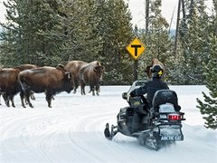 9-Day Yellowstone, Grand Teton, Jackson and Antelope Canyon Winter Tour from Los Angeles with Airport Pickup