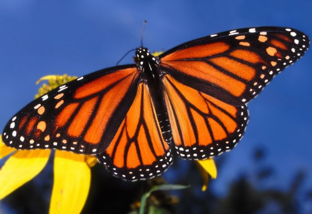 1-Day Monarch Butterfly Sanctuary Tour from Mexico City