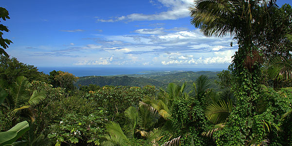 1-Day El Yunque Rainforest Sightseeing from San Juan