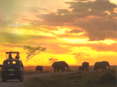 11-Days Magnificent Kenya and Tanzania Tour Package from Nairobi