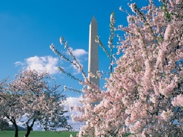 3-Day Washington DC, Cherry Blossom photography tour From Boston