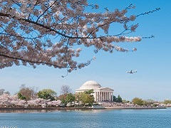3-Day Washington DC Cherry Blossom Photography Tour From Boston