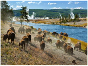 9-Day Yellowstone, Bryce National Parks, Antelope Canyon, Grand Canyon, Las Vegas Tour from San Francisco /Sacramento