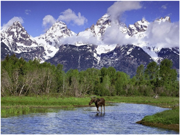 6-Day Yellowstone, Grand Teton, Mt Rainier National Parks Tour from Vancouver/Seattle