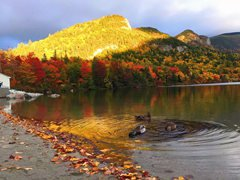 4-Day Cannon Mountain, White Mountain, New Hampshire Foliage Tour from New York