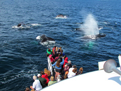 1-Day Plimoth Plantation, Whale Watch Tour from Boston