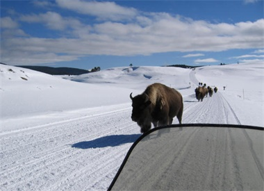 4-Day Winter Yellowstone Tour from Salt Lake City
