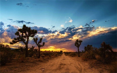 1-Day Joshua Tree National Park and Sunnyland Tour from Los Angeles