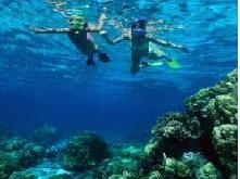 Snorkeling in Key West 1-Day Tour