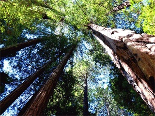 Half-Day  Muir Woods and Sausalito Tour from San Francisco
