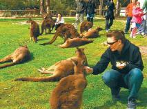 Sovereign Hill with Australian Wildlife