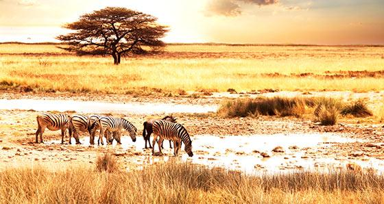 Africa Safari Tours from Nairobi and Moshi