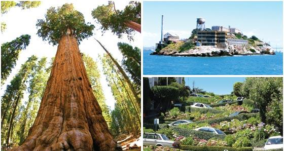 San Francisco Sightseeing Tours $50+