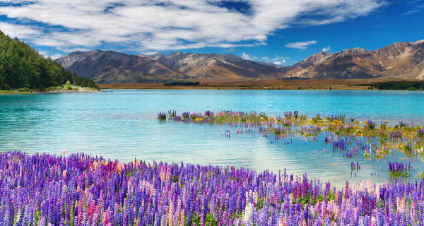 New Zealand Vacation Packages from Auckland