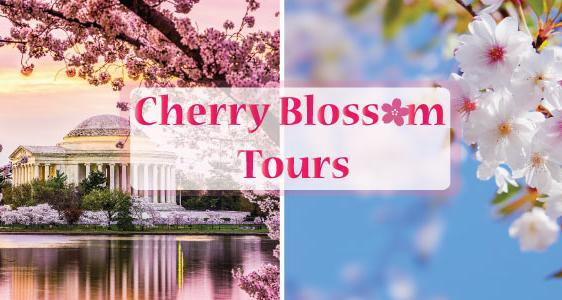Cherry Blossom Tours to Washington DC from New York - Up to 15% Off