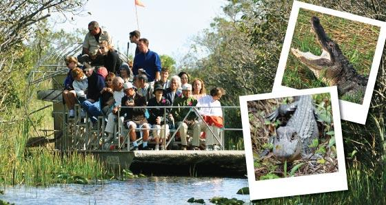 Explore 1-Day Everglades National Park Tours from Miami
