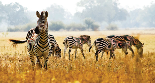 Kenya Vacation Packages from Nairobi