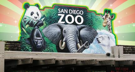 Day Trips to the San Diego Zoo