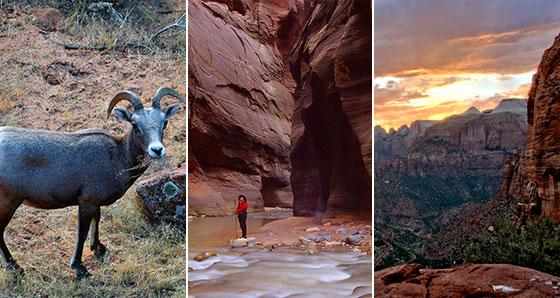 Zion National Park Vacation Packages